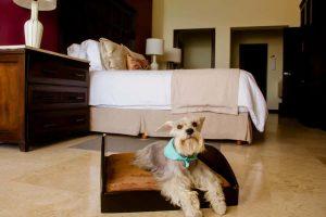 Perro descansando en cama dentro de un cuarto de hotel todo incluido pet friendly